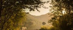 Golden (Stephanie Sinclair) Tags: trees lake sunrise mtsthelens goldenlight coldwaterlake