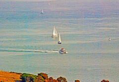 DSC_6607 - Copy (digifotovet) Tags: sanfrancisco california bay boat sail