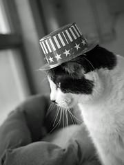 Big_04 (AbbyB.) Tags: pet animal cat newjersey feline shelter shelterpet petphotography easthanovernj mtpleasantanimalshelter