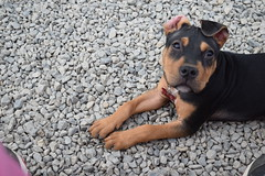 2016-05-12 15.55.35 (A Place for Paws) Tags: foster emmitt apap playday