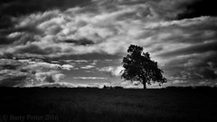 Guess which way the wind blows (Barry Potter (EdenMedia)) Tags: nikon barrypotter d7200 edenmedia
