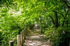 Summer Path (moaan) Tags: path forest mountain green momiji mtrokko kobe hyogo japan jp futatabipark quiet quietude leica mp leicamp summiliux 50mm f14 summilux50mmf14asph utata 2016