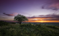 A Lone Tree (3dRabbit) Tags: tree lone alone landscape nature sunset sun cloud color natural colors glass flower hill palouse wa usa sungjinahn canon wideangle 1635