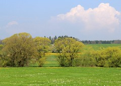 (Linda6769 (OFF)) Tags: germany village meadow thuringia willowtree harras