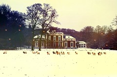 Outtake 3/52 - The Beerschoten Estate (Davey-van-Lienden) Tags: trees windows winter house snow leaves animals landscape woods estate sheep branches thenetherlands spots leftover outtake davey mansian 52photochallenge orangeburns rememberthatmomentlevel1