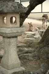SDIM1006 (M.KT) Tags: travel japan sigma hiroshima miyajima 日本 旅行 merrill 広島 宮島 dp3