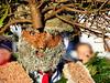 Forest Silvesterklaus portrait (Markus CH64) Tags: forest silvesterklaus silvesterkläuse waldstatt nikon d3s schweiz kultur brauchtum appenzell markus ch64 st sylvester mummers 2013 klaus silvesterchlaus ausserrhoden silvesterklausen sylvesterklaus sylvesterklausen