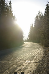 (Zebulon Dave) Tags: road canada tree alberta conifer banffnationalpark igp6842