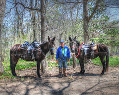 stevemarxmulesbest (decorahman) Tags: iowa mules hdr mule decorah trailride