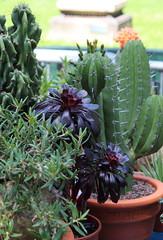 orti151 ([Blackriver Productions]) Tags: flowers cactus dog rose cane fruit garden lemon milano rosa passion bonsai fiori frutta paglia giardino acero orchidea peonie palestro campanella agrumi orticola bulbi