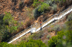 Downstairs Verdes (Atwater Village Newbie) Tags: ocean california woman man men stairs bay la los stair exercise angeles hiking south may down hike next stairway mans walker mens hiker exerciser jogging gent jog downstairs pv verdes jogger palos rancho rpv 2013 dsc1542