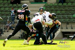 Cologne Falcons vs. Duesseldorf Panther 2013-05-12 15-56-10 (AmFiD) Tags: football gfl dsseldorfpanther colognefalcons amfid