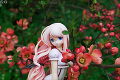 Will I ever? (gwennan) Tags: flowers red anime flower color macro cute green nature colors japan closeup toy spring figure sakura figures pvc nanako sakurasakura megahouse jfigure sakurananako brilliantstage