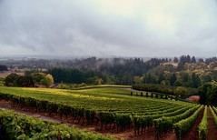 Willamette Wine Country (thor_mark) Tags: trees mist nature oregon unitedstates dundee overcast vineyards day1 hillsides project365 colorefexpro nikond800 archerysummitwinery