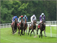 Dante Stakes Epsom Derby Trial, York Races, 16 May 2013 (robin denton) Tags: york horses horse sport dante horseracing races racecourse racehorse northyorkshire thoroughbreds knavesmire racehorses yorkraces yorkracecourse knavesmirewoods dantestakes dantestakesepsomderbytrial epsomderbytrial