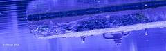 am Weiher 14-2 (R-Pe) Tags: life blue red white black rot eye art robert water coffee caf smile face breakfast night train canon square photo essen gesicht wasser noir day foto mask nacht live tag fine wiese kaffee zug security ferrari bleu peter hut trainstation rosen blau augen lachen trinken bahn wald schwarz chai figur acryl leben maske pastell masken ingwer larve blaw bahnstation 1764 tschai rpe rbi 1764org www1764org