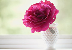Bliss (jljjld) Tags: light red white window rose natural tag vase bliss windowsill twine hobnail milkglasss ifyoucouldsmellthisrose
