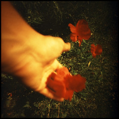 hand and poppies (Roberto Messina photography) Tags: film xpro pinhole filter expired sephia zero2000 velvia50