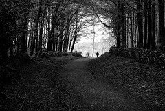 Into the light (elBurro2013) Tags: wood trees ireland white black forest clare co