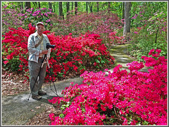 Photographing Azaleas (Runemaker) Tags: flowers forest woods photographer azaleas pennsylvania arboretum pa devon dl jenkins