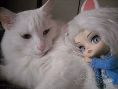 DSCN77028_Dal_Tezca_ (applecandy spica) Tags: blue white cute cat fur eyes furry kitten chat doll soft tail kitty fluffy dal ears pullip katze paws lovely custom fatcat chubby weiss gatto bianco blanc kittie ktzchen micio chaton gattino weis soffice peloso morbido gattone micetto micione gattochiatto tezca