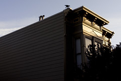 (Pay No Mind) Tags: sf sanfrancisco house tree bird fuji shadows victorian crow magichour lowerhaight x100