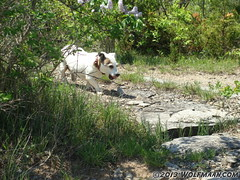Morgana Walking in Wainfleet Quarry May 20, 2013 (Wolfmaan) Tags: camping ontario canada outdoors hiking barefoot barfuss wainfleet