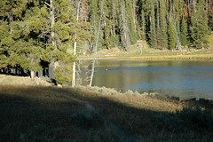 219 - Bison crossing the river (Scott Shetrone) Tags: animals forest scenery events places rivers yellowstonenationalpark bison mammals 7th anniversaries wymoing