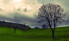 DSC_0655 (Anthony.Du) Tags: tree green vert paysage campagne arbre