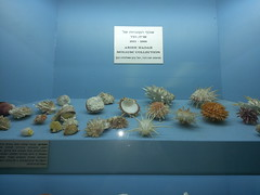 Shells in TAU Biology Collection (Zachi Evenor) Tags: shells israel shell tau snails biology  mollusca molluscs telavivuniversity         zachievenor