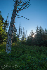 Spruce-Fir Sunrise (johnathanwbass) Tags: park trees sun fern forest sunrise nikon bass johnathan national fir rise spruce zone clingmansdome greatsmokymountains frasier sprucefir d80