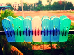 Holding Down (JoVivek) Tags: pink blue trees india tree green home garden colours clips ground maharashtra jogging pune punephotographer cimmercialphotography vivekjoshiphotography adiraimaging