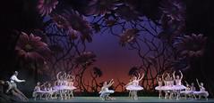 Ballet Essentials: Don Quixote