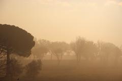 (chiara.chi) Tags: trees fog alberi nebbia