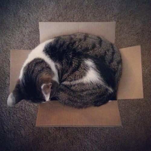 big #cat, small #box
