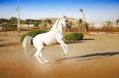 1 (Sharifa Alzahrani) Tags: cute art beautiful photography photo nikon photos pics picture pic capture photooftheday                          d7000 7000