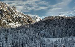 Incanto da Zannes (EmozionInUnClick - l'Avventuriero's photos) Tags: inverno montagna altoadige bosco valdifunes abeti zannes