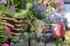 (Fransois) Tags: flowers fleurs spring dof montral market bokeh jeantalon march printemps