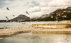 Seagulls (raymond_zoller) Tags: sea seagulls mountains bird water bar eau meer wasser stones seagull places berge steine mwe woda vogel montenegro mouette adria brdo mittelmeer   marenostrum crnagora
