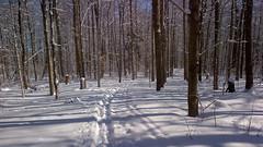 Trail around Victoria Pond Arboretum University of Guelph (Bruce Shapka) Tags: snow guelph arboretum trail victoriapond bb9900
