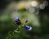 Spring is coming (nikjanssen) Tags: flowers light nature spring bokeh olympus tmi bokelicious vanagram micro43 helios44m458mm2