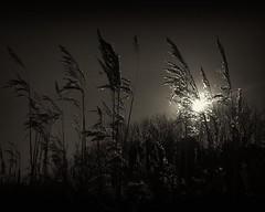 Mobile 002 (dive69uk) Tags: light blackandwhite sun mobile clouds digital reeds mono coast nokia natural naturallight warsash lumia