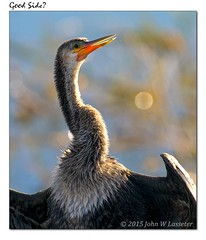 good-side (hodad66) Tags: bird florida anhinga vierawetlands sonya7r contaxvariosonar70300