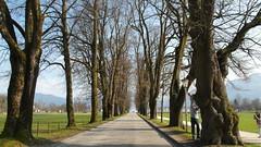 Sound of Music tour, Salzburg (ydcheow87) Tags: tree salzburg nature austria europe soundofmusic