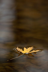 Floating (James Charles) Tags: water yellow leaf float
