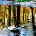 Golden Water - Pennsylvania