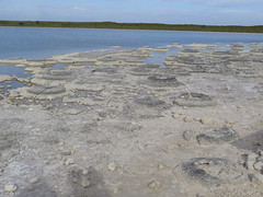 "Stromatholites <a style=""margin-left:10px; font-size:0.8em;"" href=""http://www.flickr.com/photos/83080376@N03/16373108662/"" target=""_blank"">@flickr</a>"