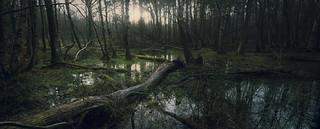 Hevingham Wood 20/02/15