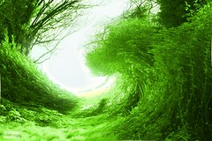 Green Wash (innpictime  ) Tags: green field wave foliage infrared roller greenery verdant toning colouration