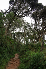 Horton plains jungle (loddeur) Tags: outcrop cliff walking nationalpark highlands flora plateau hike trail jungle srilanka cloudforest endemic precipice escarpment hortonplains